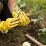 Самостоятельное выращивание фруктов и овощей
